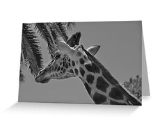 Giraffe - Adelaide Zoo Greeting Card