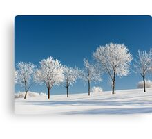 Frosty Trees on a clear Winter day Canvas Print