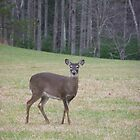 Cades Cove Deer by JeffeeArt4u
