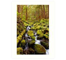 Olympic National Park Stream Art Print