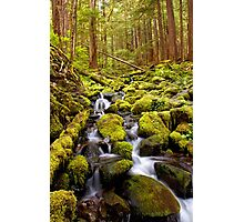 Olympic National Park Stream Photographic Print