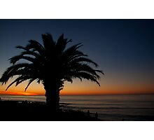 Silhouetted Palm Photographic Print