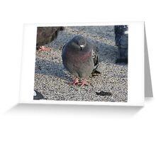 'I have a Royal Purple Bib'  3690 Greeting Card