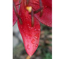 Red Lilly  Photographic Print