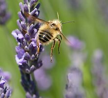 Pardon Me....I'm A Little BeeHind by TeresaB