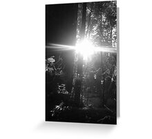 red woods lens flare Greeting Card
