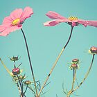 Cosmos by Hilary Walker