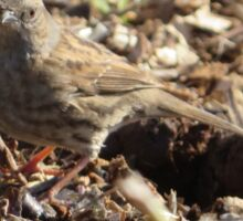 Happy Little Sparrow  Sticker
