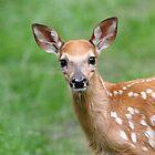 Bambi - iPhone Case  by Alinka