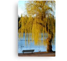 Lost Lagoon - Park Bench and Willow Tree Canvas Print