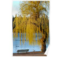 Lost Lagoon - Park Bench and Willow Tree Poster