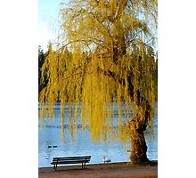 Lost Lagoon - Park Bench and Willow Tree Photographic Print