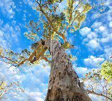 Reach For The Sky by Darren Speedie
