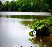 Ducks on the Lake at Sheffield Park by Ms-Bexy