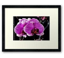 Orchid 2011 Framed Print
