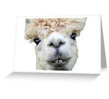 Alpaca llama Greeting Card