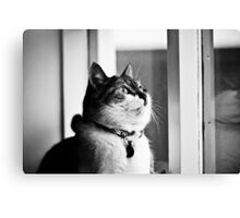 Loppa my cat Canvas Print