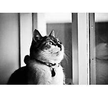 Loppa my cat Photographic Print