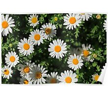 The Daisy Bed Poster