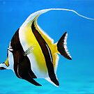 Moorish Idol by Jessica Fittock
