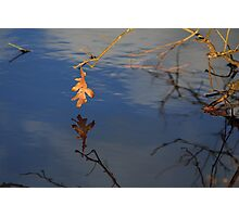 Lone Leaf Photographic Print