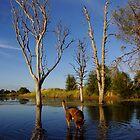 Red kelpie, blue waters. by Penny Kittel