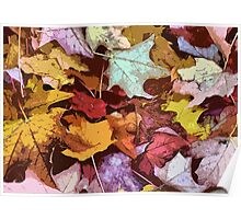 Leaves Of Fall Poster