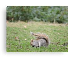 Bright Eyes Bushy Tail Canvas Print