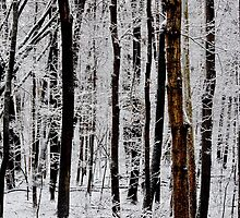 Painted (by Old Man Winter) by hubcap