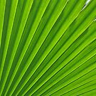 fresh green leaf by AravindTeki