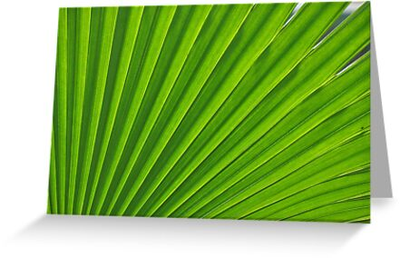fresh green leaf by AravindTeki