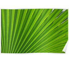 fresh green leaf Poster