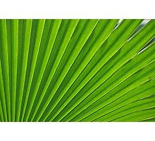 fresh green leaf Photographic Print