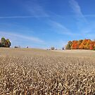 Fall Colors by Jack Ryan