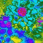 Flower garden by Joyce Grubb