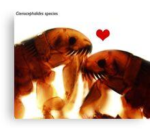 Kissing fleas Canvas Print