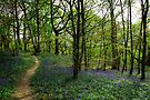 Bluebell Woodland by Andrew Bret Wallis