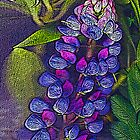 Blue lupin by Joyce Grubb