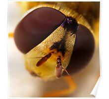 Hover-fly up close and personal Poster