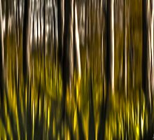 Abstract from The Swamp by JKKimball