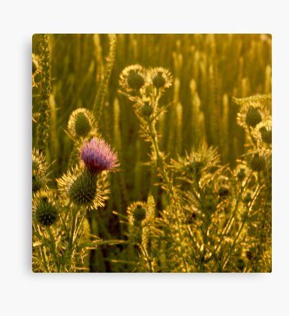 Spark of Purple Canvas Print