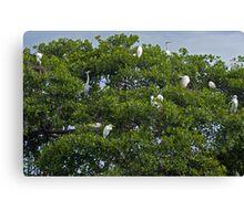 Cranes Nesting. Canvas Print