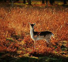 Seen you! by John Dunbar