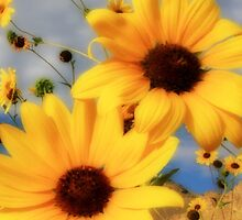 Sunflower Ipod case by Gene Praag
