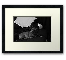 Jerry And Terry Framed Print