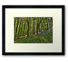 Dorset Spring,  Framed Print