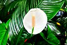 hawaiian botanical gardens IV by PJS15204