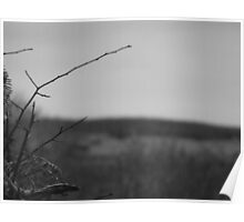 Lonely Twig Poster