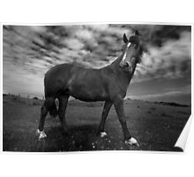 Horse (36-13) Poster