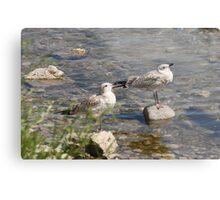 Seagulls Sunning Metal Print